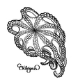 Graphic octopus in bottom view vector image