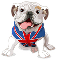 English Bulldog vector image