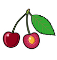 Cherry on a white background vector image