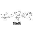 shark alert vector image