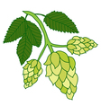 Hops plant isolated on white background vector image