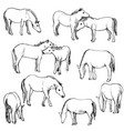 set of horses vector image