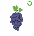 Grape vector image vector image