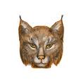 Lynx on white vector image