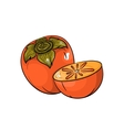 persimmon on white background vector image