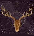 sketch of deer skull on dark purple background vector image