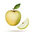 Watercolor Apple vector image