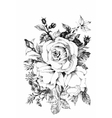 Hand drawn garden rose flower isolated on white vector image