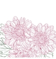 chrysanthemum background vector image vector image