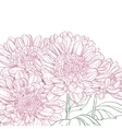 Line pink chrysanthemum background vector image vector image