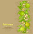 bergamot background vector image