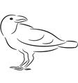 Raven vector image