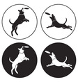 dog-frisbee vector image