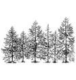 pine forest hand drawn border vector image