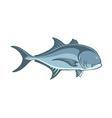 fish Caranx vector image