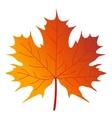 Maple tree leaf vector image