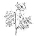 Plant briar Stock vector image