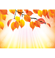 Autumn branch with yellow leaves background vector image vector image