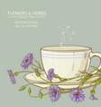 cup of cornflower tea vector image