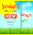 summer new collection stylish advertisement text vector image
