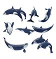 killer whale show vector image