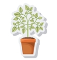 tree plant pot isolated icon vector image