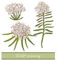 wild rosemary vector image