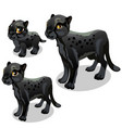 maturation stages of black panther vector image