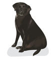 Pet dog vector image