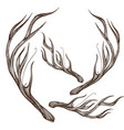 hand drawn deer antlers isolated on white vector image