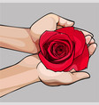 Hands gently holding a bud of a red rose vector image