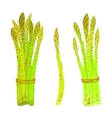 asparagus spears tied in a bunch vector image
