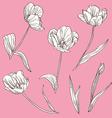 decorative tulips set vector image