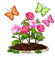 flower bed of peonies in ground and butterflies vector image