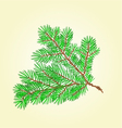 Spruce branch lush conifer isolated vector image