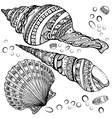 Set of decorative seashells isolated on white fond vector image