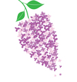 lilac vector image