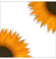 Sunflower banner vector image