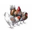 watercolor rooster and hen isolated object bright vector image