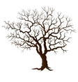 Tree without leaves isolated on white vector image