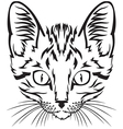 kitten muzzle vector image vector image