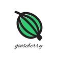 Doodle gooseberry vector image