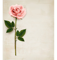 Single pink rose on an old paper background vector image vector image