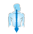 anatomy of human spine vector image