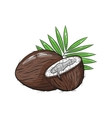 coconut on white background vector image