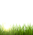 Green grass lawn with sunrise on white Floral vector image