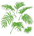 green palm fronds sketch vector image vector image
