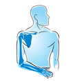 human anatomy hand bones vector image