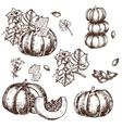 hand drawn set sketch pumpkin leaves vector image