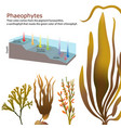 underwater algae seaweed elements vector image